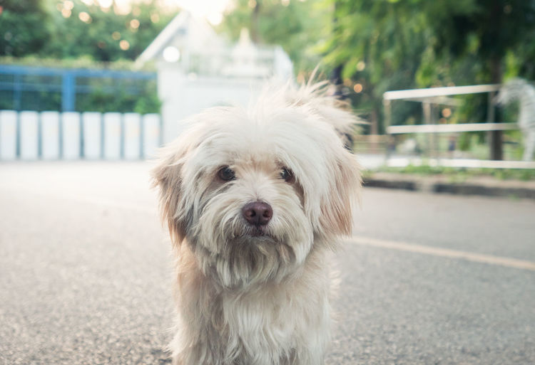 Close-up portrait of dog on road