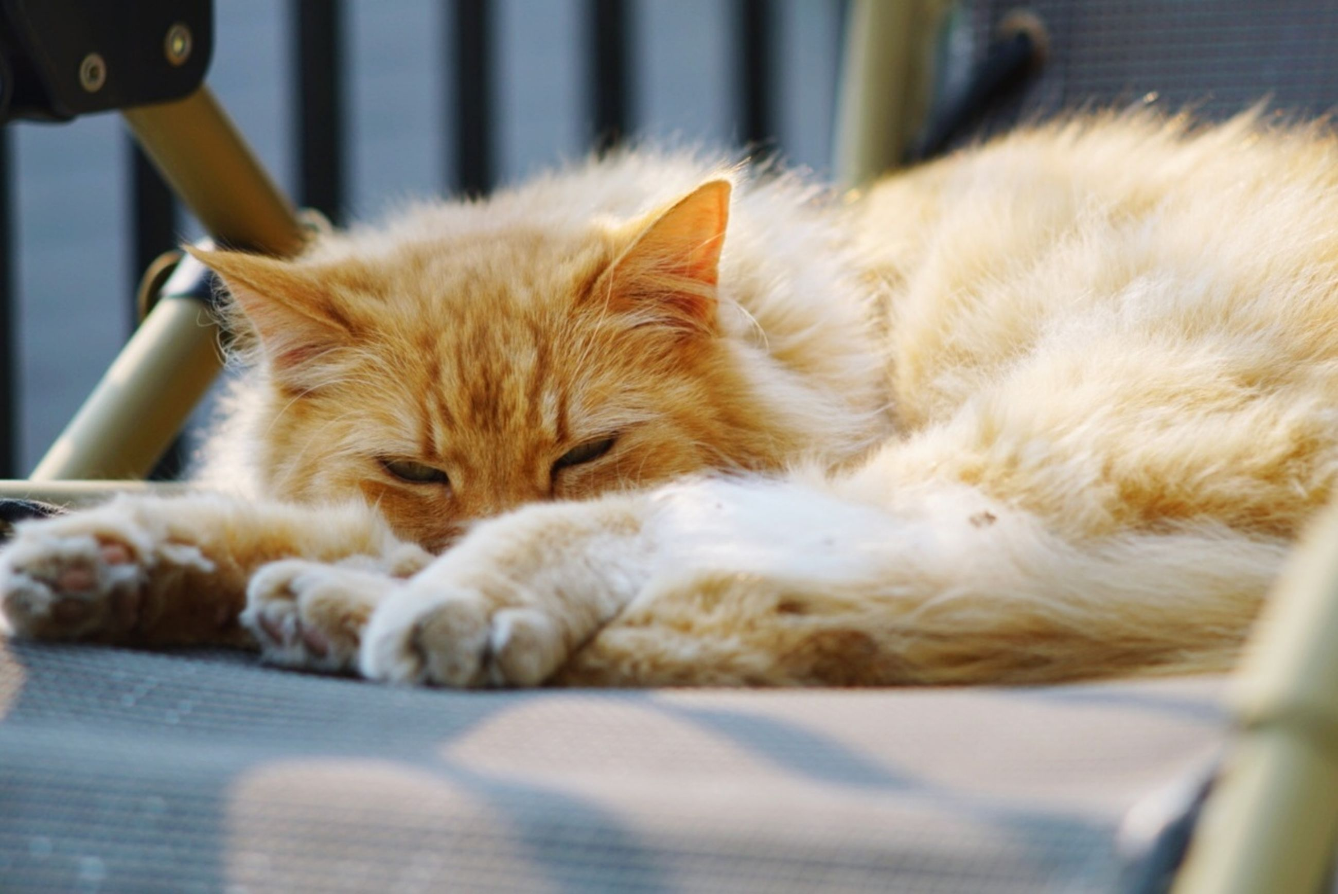 cat, domestic cat, relaxation, feline, mammal, domestic, pets, animal themes, animal, domestic animals, one animal, eyes closed, sleeping, resting, lying down, no people, vertebrate, selective focus, whisker, close-up, ginger cat