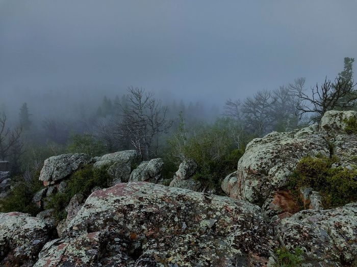 Vedauwoo Wyoming Wyoming Wyoming Landscape Hiking Foggy Morning Tree Mountain Forest Fog Pine Tree Pinaceae Sky Landscape Close-up Plant