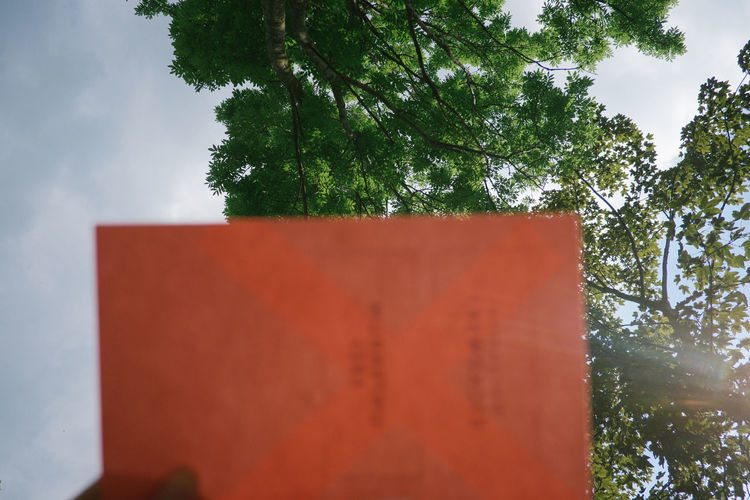 Sky Nature Day Focus On Foreground Tree Outdoors Book Stockphoto Reading Read Summertime Summer Happy Tree Outside Libary Plant Red No People Growth Wall - Building Feature Built Structure Architecture Orange Color Cloud - Sky Low Angle View Selective Focus Branch Close-up Communication The Minimalist - 2019 EyeEm Awards