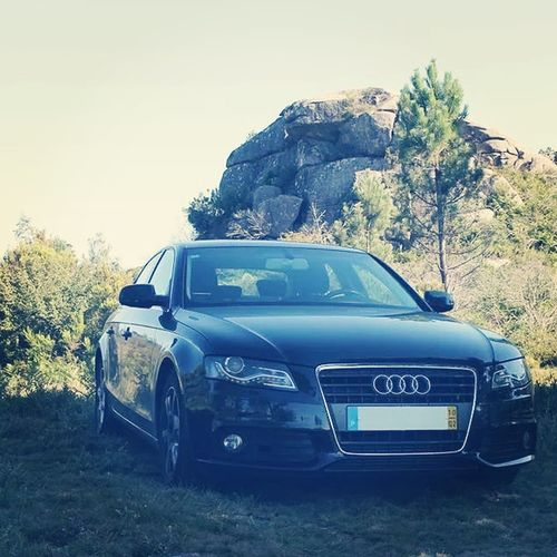 2.0  A4 Audi FourRings Nature Tt Wild Wildlife
