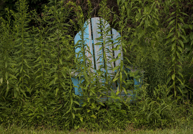 The old blue chair Chair Deck Chair Wooden Chairs Abandoned Chair Agriculture Blue Wooden  Forest Forest Photography Grass Green Color Land Leaf Nature Old Chair Outdoor Chair Outdoors Overgrown And Beautiful Plant Part Plantation Tranquility Tree