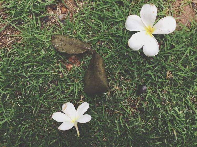 Let it be. we can't change 😪🌼🌸🍂🌎 Let It Be Nature Flowers Grass Babigibipic Yard Leaves