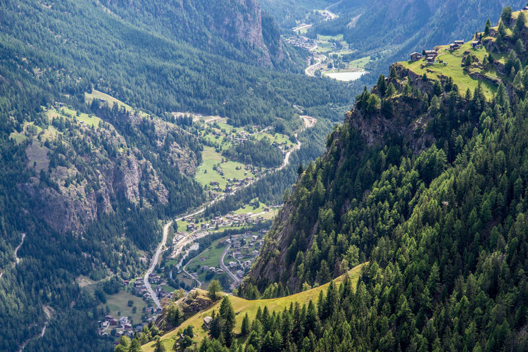 High angle view of pine trees in valley