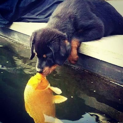 Who needs a frog when you can kiss a fish. 💋Dogsofinstagram Dogsarejustsoamazing
