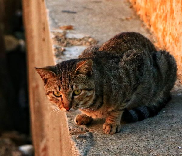 Cat 🐈 760D Canon EyeEm Animal Themes Animal Mammal Vertebrate Feline Domestic Animals Indoors  Looking Focus On Foreground Domestic Cat No People Looking Away One Animal Whisker Close-up Domestic Cat Day Relaxation