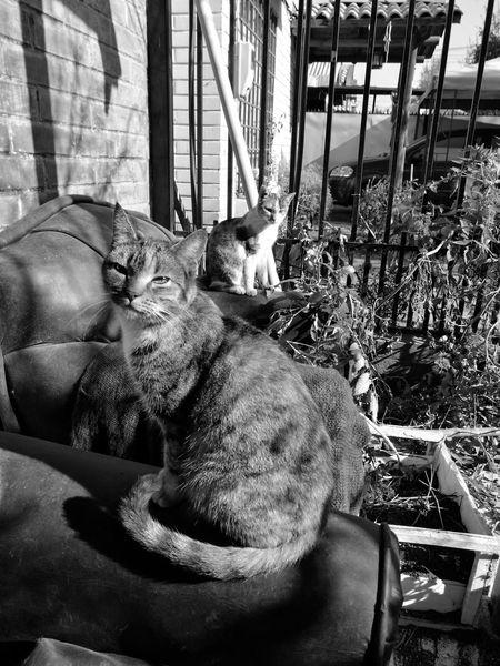La vieja y la tia. Pets Domestic Cat Animal Themes Domestic Animals One Animal Feline No People Mammal Day Cats Of EyeEm Cats 🐱 Gato😽 Felines Felino Gatos 😍 Cats Cat♡ Tree Looking At Camera Sunlight Animal