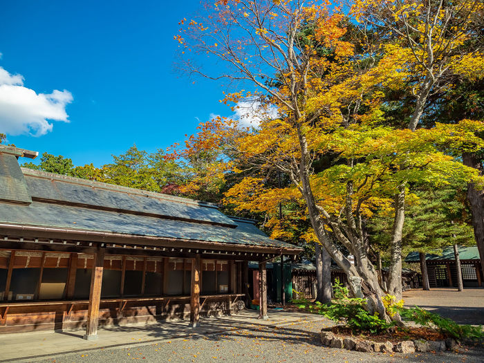 Autumn in the yard or Hokkaido Shrine, Sapporo, Hokkaido, Japan Tree Plant Built Structure Architecture Sky Building Exterior Day Autumn No People Building Orange Color Cloud - Sky Sunlight House Hokkaido Shrine Sapporo Japan EyeEmNewHere Olympus OM-D E-M1 Mark II M.zuiko 12-40mm F2.8 Pro