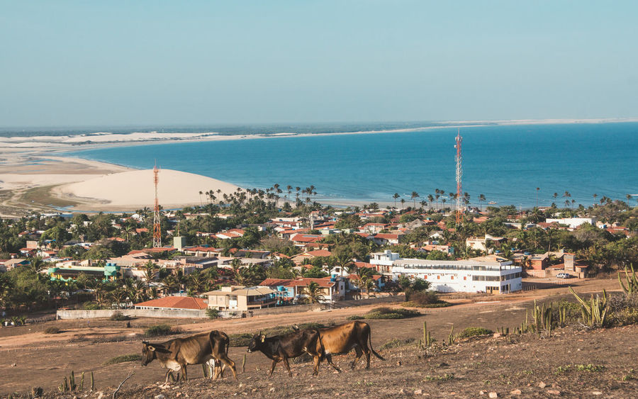 Jericoacoara from above. Nature Animal Antenna Arid Climate Beach Beachphotography City Cow Day Dry Dune Houses Ocean Outdoors Palm Tree Sand Sand Dune Sea Sea And Sky Seascape Shore Tower Town Village Water The Street Photographer - 2017 EyeEm Awards The Photojournalist - 2017 EyeEm Awards Lost In The Landscape
