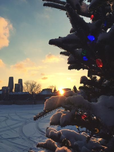 Winter Sunset Sky Air Brisk Warm Colors Bright Lights Bulb Tree Snow Sunset Sky Winter Snow Tree Cold Temperature No People Day Outdoors Nature