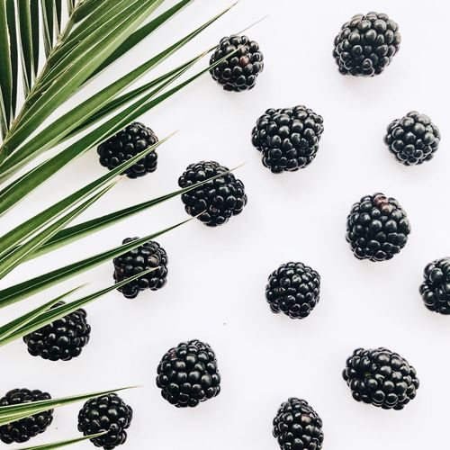 fresh blackberries No People Indoors  Pattern Large Group Of Objects Backgrounds Still Life White Background Full Frame High Angle View Arrangement Studio Shot Shape Choice Geometric Shape Design Variation Directly Above Plant Creativity Table