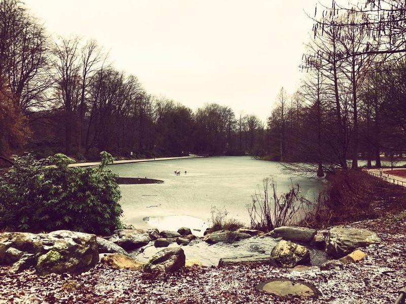 Stadtpark Gütersloh, germany. Frozen Lake, Wintertime Outdoors No People Sky Day Nature