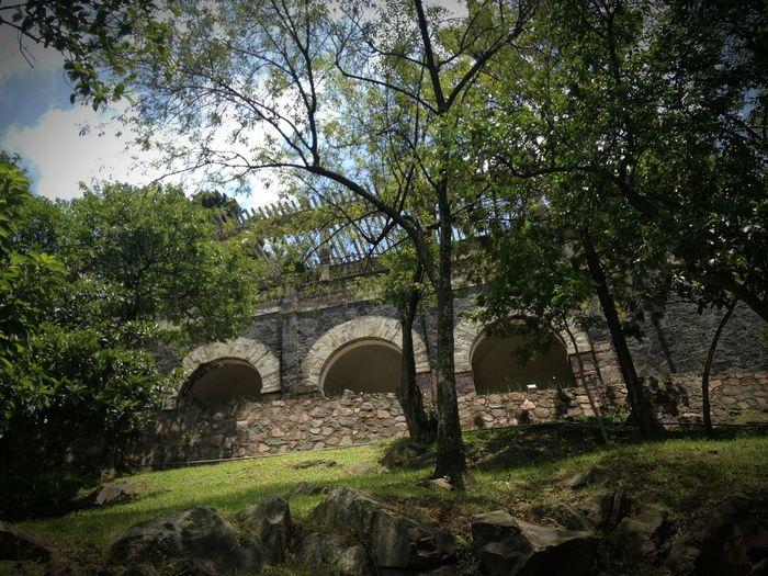 Arch Tree Architecture Built Structure No People Nature Travel Destination Chapultepec CDMX