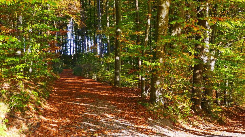 Autumn impressions in Bavaria