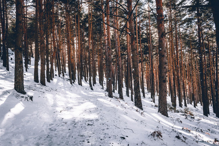 Forest in winter. Wood. Snow. White. Wood Beauty In Nature Cold Temperature Day Forest Nature No People Outdoors Scenics Season  Snow Tranquil Scene Tranquility Tree Tree Trunk Winter Woods Shades Of Winter
