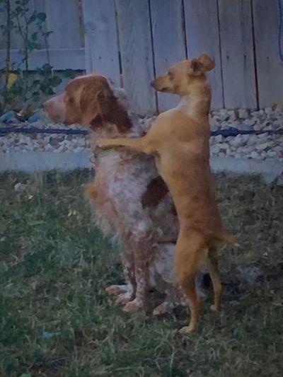 Siblings Pets