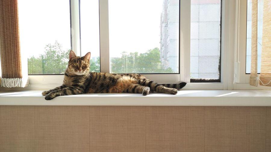Portrait of cat lying on window sill