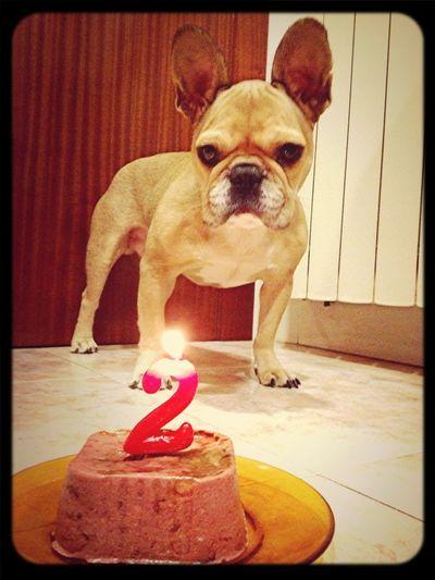 Felicidades Bruc! 2 Años Con Nosotros / Felicitats Bruc! 2 Anys Amb Nosaltres / Happy Birthday Bruc! 2 Years With Us