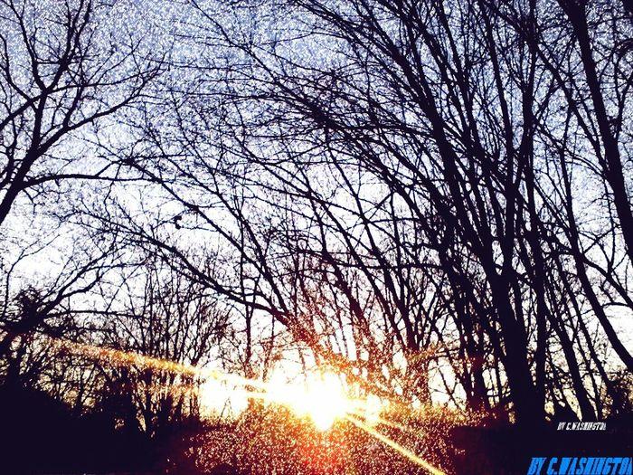 Early Morning Sun Sun Blue Sky Woods Sun Rays