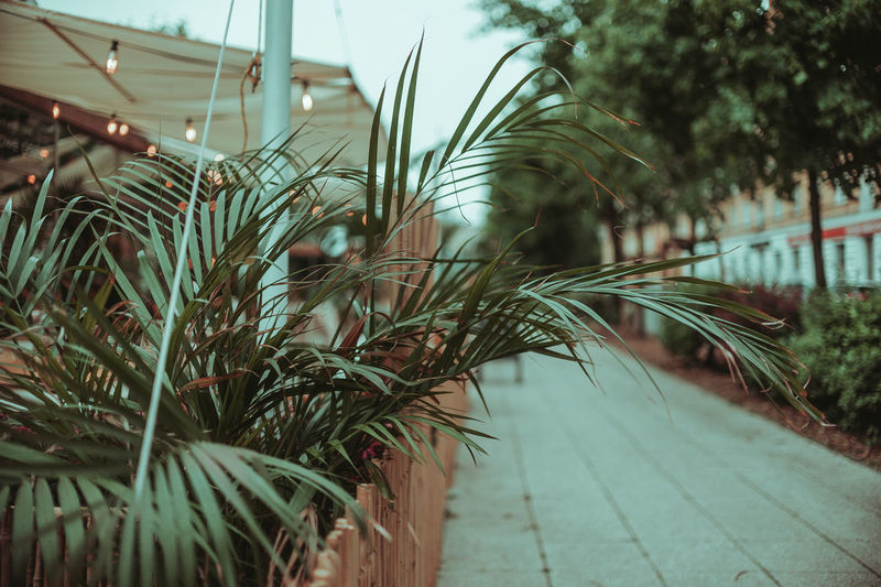 Close-up of palm tree by footpath
