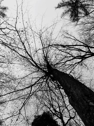 Jeder Ast hat eine Geschichte zu erzählen Tree Low Angle View Sky Nature Branch No People Outdoors Bare Tree Growth Tree Trunk Beauty In Nature Day Black And White Cold Temperature Wintertime
