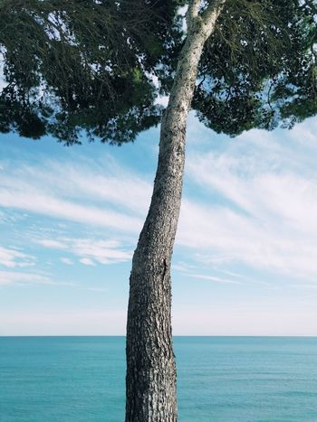 Sea Beach Horizon Over Water Tree Nature Blue Sky Water Outdoors Beauty In Nature Day No People Tranquility Horizon Wallpapers Wallpaper Tree Blue Sky