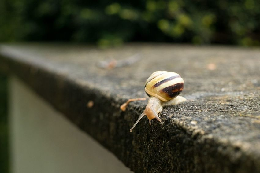 The Year of Living Dangerously Strasbourg Urban Photography Eye4photography  BabelFishEye Urban Nature From My Point Of View Close Up EyeEm Gallery Gimme A Smile Snail Snails Mollusc