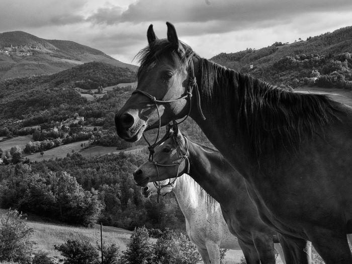 Horses standing on landscape against sky