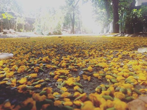 Yellow road. 😍
