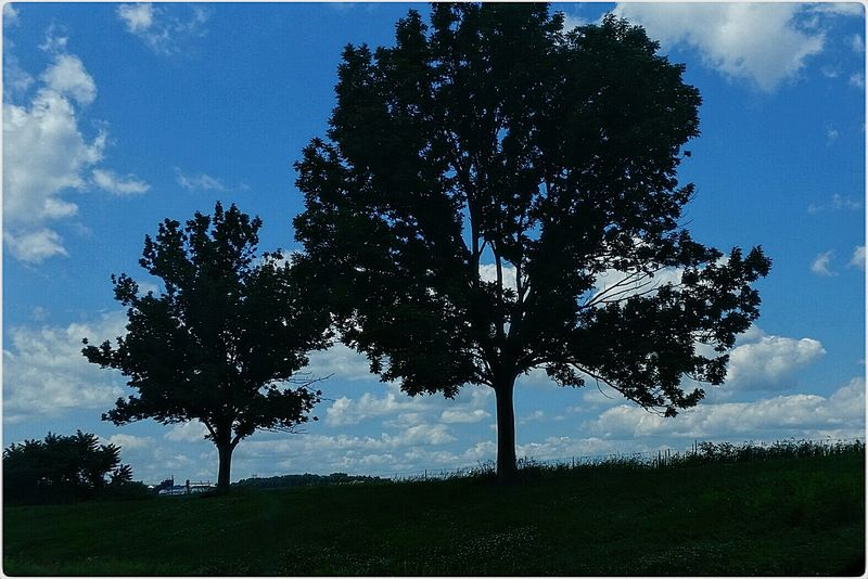 Trees Sky & Clouds Taking Photos Simplicity Landscape Wall Art Landscape_Collection