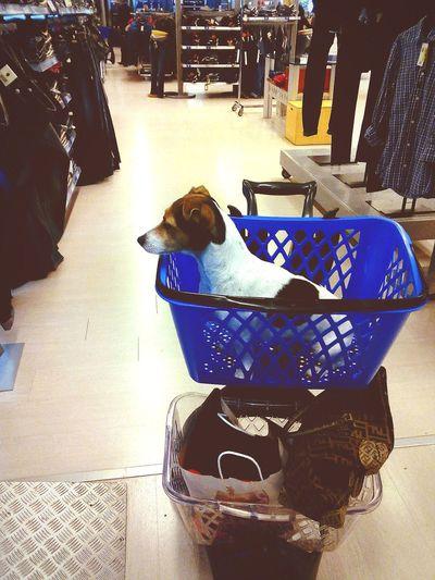 Shopping Con stile:)