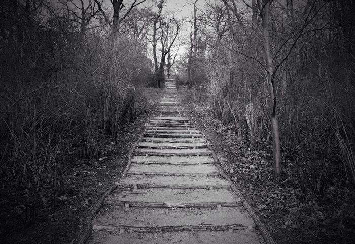 Nature Blackandwhite Steps Wood Stabil EyeEm Nature Lover