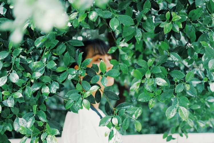 leef Tree Child Childhood Leaf Girls Human Hand Branch Headshot Close-up Plant Greenhouse Horticulture Vegetable Garden Gardening Glove Florist