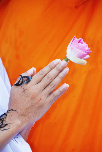 Cropped hand holding pink lotus in temple