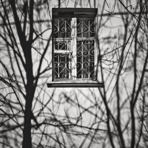 Shadow Of Bare Trees On House