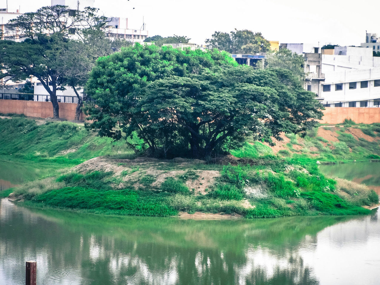 building exterior, architecture, built structure, tree, water, reflection, waterfront, outdoors, grass, no people, day, green color, city, plant, nature, sky