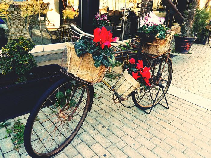Bicycle Mode Of Transport Transportation Land Vehicle Flower Stationary No People City Nature Day Outdoors Vintage Bicycles Vintage Art ArtWork Installation Daylight Tranquility The City Light Sunlight And Shadow Bycicle Photography Bycicle Old Bycicle Art Bycicle Lovers Reflection