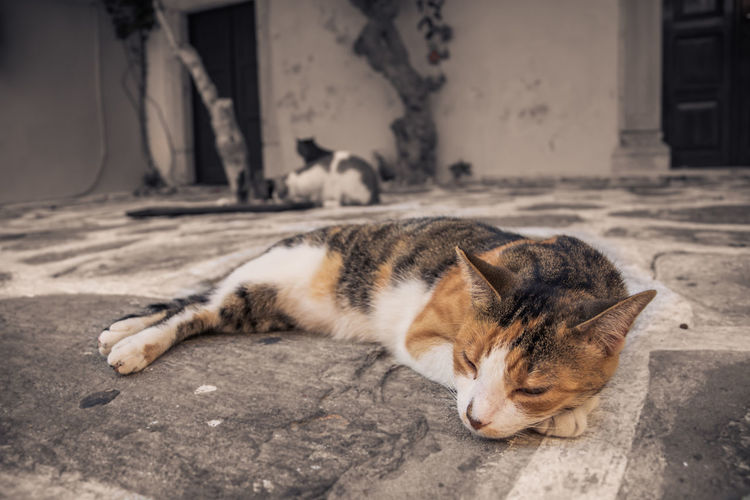 Cat sleeping on ground