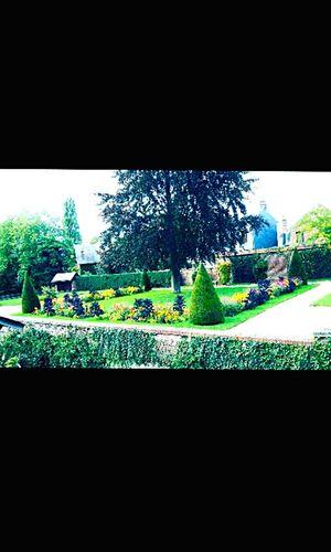 Relaxing Arbustes Arbres Flower Natural Beauty Jardins Fleurs Naturelovers Vert Green