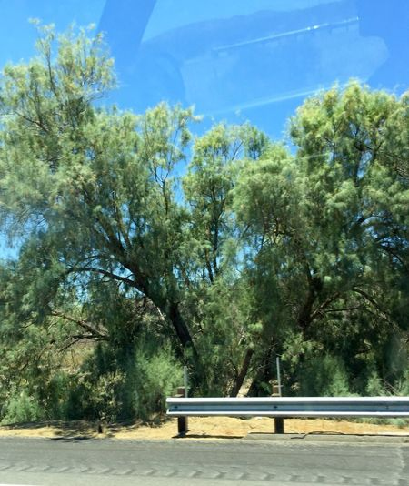 Drivebyphotography Road Trip Highway Trees Moving In Motion