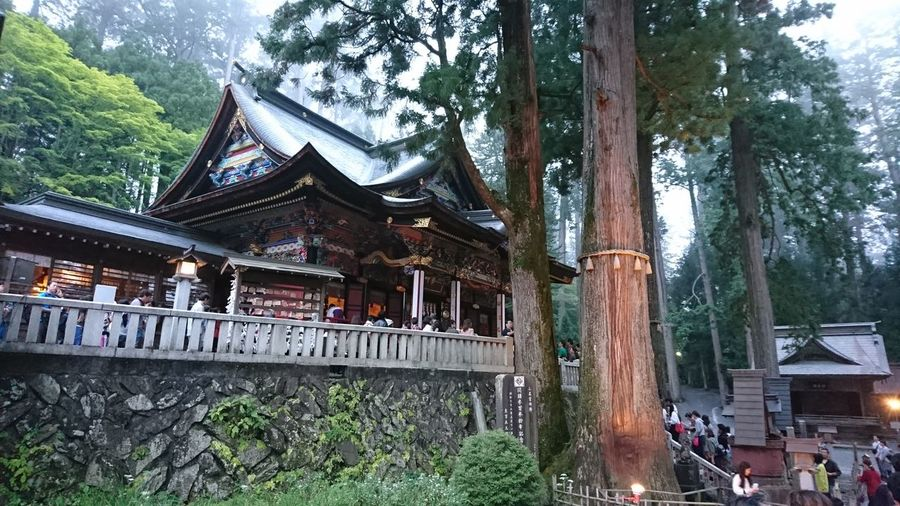 Architecture Tree Built Structure Spirituality Building Exterior Tree Trunk Outdoors Temple - Building No People Sky Day Religion Shrine Of Japan Milenium