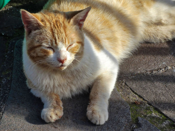 Cat enjoying the sun. One Animal Mammal Cat Pets Domestic Feline Vertebrate Domestic Animals Domestic Cat No People Close-up Day Whisker Nature Outdoors Portrait Relaxation Ginger Cat Kitty Cats Animal Animals
