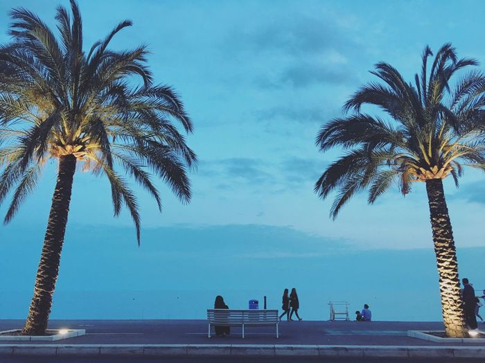 Nice Nizza Côte D'Azur Coldplay Concert  France Le Midi Midi South Of France Palm Trees Mediterranean  Palmen