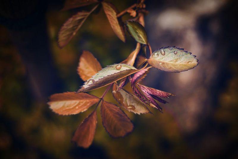MOODYROSE  Leaf