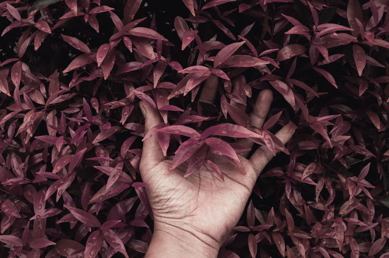 Cropped Image Of Hand Touching Wet Purple Plants