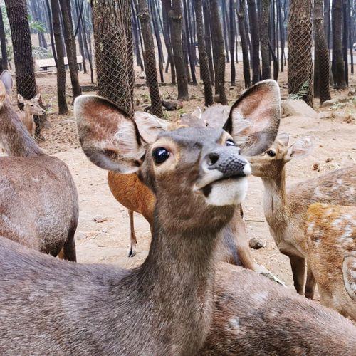 Close-up portrait of deer in zoo