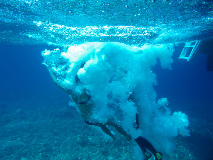 Adventure Animals In The Wild Diving Incidental People Jump Nature Nature Outdoors Sea Life Swimming Swimming Animal Tourist Travel Destinations UnderSea Underwater Water Wildlife