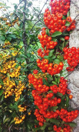 ősz Denken  Red Orange