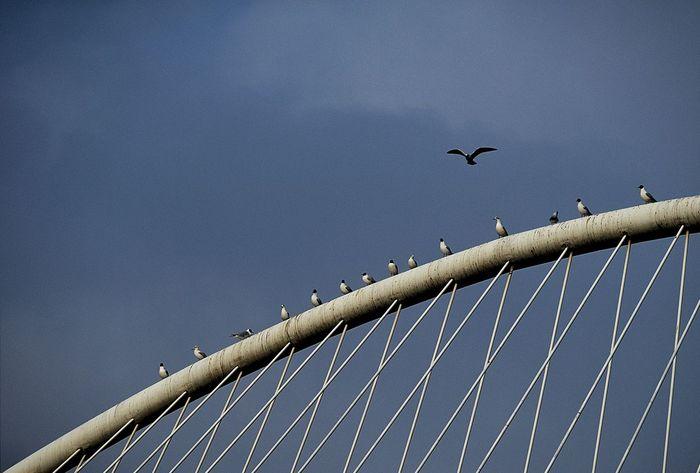 Perching on the bridge. Avian Beauty In Nature Bilbao Bird Blue Bridge E-M1 Euskadi Gull Nature No People Olympus Olympus Om-d E-m10 Olympus OM-D EM-1 OM-D Perching Puente Del Ayuntamiento Seagull Sky SPAIN