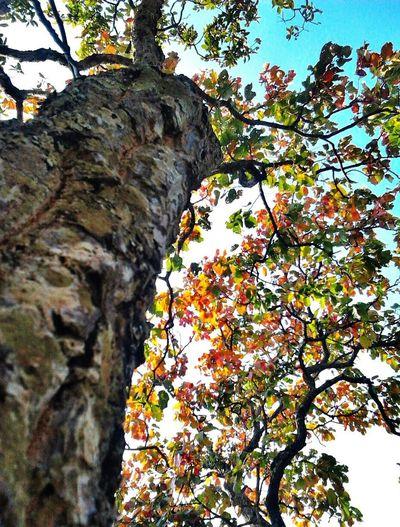 Seasonscollection Relaxing Taking Photos Hello World Enjoying Life Seasonchange Wild Trees Showcase March